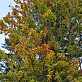 Autumn Colours by Leonard Voicu