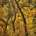 Autumn Cottonwood Thicket by Ron Cline