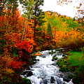 Autumn Creek by Carol Dyer