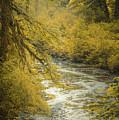 Autumn Creek by Don Schwartz