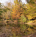 Autumn Cypress At Jeffries Creek by MM Anderson