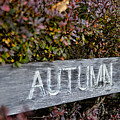 Autumn by David Arment