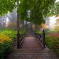 Autumn Dream by David Gn
