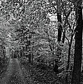 Autumn Drive Bnw by Bonfire Photography