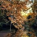Autumn Enchantment by Jessica Jenney
