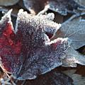 Autumn Ends, Winter Begins 2 by Linda Lees