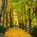 Autumn Entrance 2 by Steve Harrington