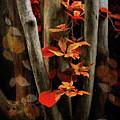 Autumn Epilogue by Jessica Jenney