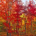 Autumn Experience by Joshua McCullough