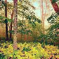 Autumn Fall Colors - Brilliant Ferns In The Blue Ridge Ap by Dan Carmichael