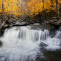 Autumn Falling Square by Bill Wakeley