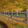 Autumn Fence by Bill Wakeley