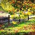 Autumn Fence by Carol Groenen