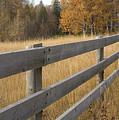 Autumn Fence by Idaho Scenic Images Linda Lantzy