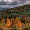 Autumn Fencerow by Wayne King