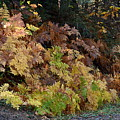 Autumn Ferns by Michael Allred