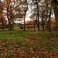 Autumn Fields, by Melissa Stephenson