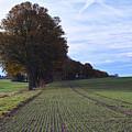 Autumn Fields, Syke, Germany by Carsten Lemmermann