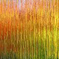 Autumn Fire Abstract by Gill Billington