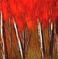 Autumn Fire by Bill Morgenstern