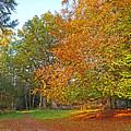 Autumn Fire by Gill Billington