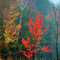 Autumn Fire by MaryGail Perkins