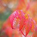 Autumn Fires by Mo Barton