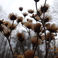 Autumn Flowers by Amanda Balough