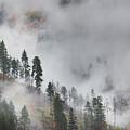 Autumn Fog by Eggers Photography
