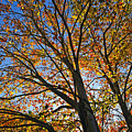 Autumn Foliage by John Greim