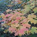Autumn Foliage by Ralph Baginski
