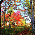 Autumn Forest by Debbie Oppermann
