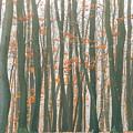 Autumn Forest by Jelena Jovanovic