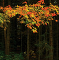 Autumn Forest Leaves by Steve Somerville