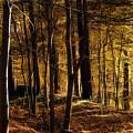 Autumn Forest by Lutz Baar