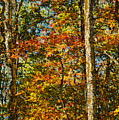 Autumn Forest by Shelley Dennis