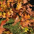 Autumn Fragrance by Georgeta  Blanaru