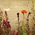 Autumn Garden by Michele Burgess