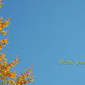 Autumn Ginkgo Tree by Eena Bo