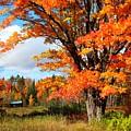 Autumn Glory by Gigi Dequanne
