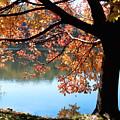 Autumn Glory by Karin Everhart