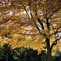 Autumn Glow by Felipe Gomez