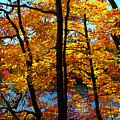 Autumn Gold by Alan Lenk
