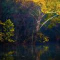 Autumn Gold by Doug Sturgess