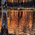 Autumn Gold by Jill Love