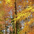 Autumn Gold  by Ola Allen