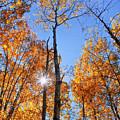 Autumn Gold Sunburst by Christina Rollo