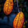 Autumn Gradation by James Aiken