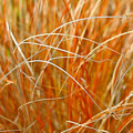 Autumn Grass Abstract by Art Block Collections
