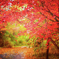 Glorious Foliage On The Rail Trail by Anita Pollak